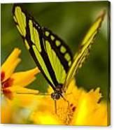 Malachite Butterfly On Flower Canvas Print