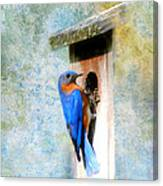 Male Eastern Bluebird At Nesting Box Canvas Print