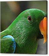 Male Eclectus Parrot Canvas Print