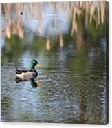 Mallard - Duck - Lonely Guy Canvas Print