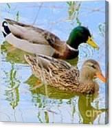 Mallard Couple Canvas Print