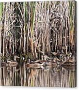 Mallard Reunion Canvas Print