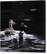 Mallards - Like Walking In The Rain Canvas Print