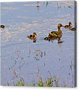 Mama Duck And The Kiddies Canvas Print