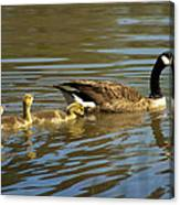 Mama Honker And Goslings Canvas Print