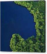 Mangrove Rhizophoraceae Stand, Bocas Canvas Print