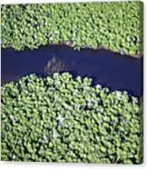 Mangrove River Canvas Print