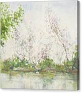 Mangrove Swamp Canvas Print