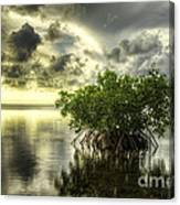 Mangroves I Canvas Print