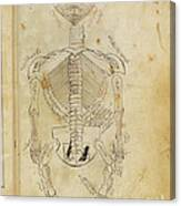 Mansurs Anatomy, Skeletal System, 15th Canvas Print
