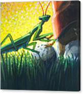 All Players Great And Small - Mantis Canvas Print