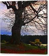 Maple Evening Canvas Print
