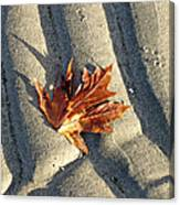 Maple Leaf Forever Canvas Print