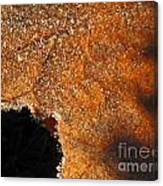 Maple Leaf Frosted Canvas Print