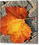 Maple Leaf In Fall Canvas Print