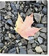 Maple Leaf In The Rain Canvas Print