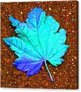 Maple Leaf On Pavement Canvas Print