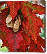 Maple Leaves And Seeds Canvas Print