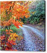 Maple Road Canvas Print