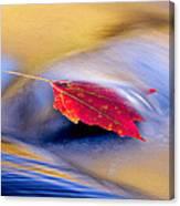 Maple Stream Canvas Print