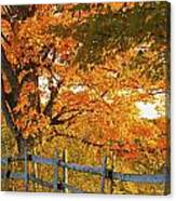Maple Trees And A Rail Fence In Autumn Canvas Print