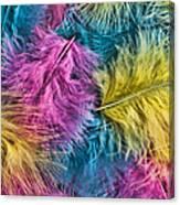 Marabou Colours Canvas Print