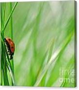 Ladybug In The Meadow Canvas Print