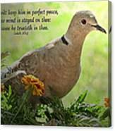 Marigold Dove With Verse Canvas Print