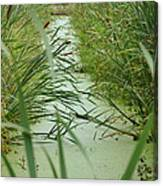 Marsh-field Ma Canvas Print