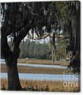 Marsh Oak Canvas Print