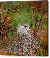 Marsh Spider Web Canvas Print
