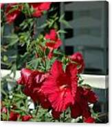 Martha's Vineyard Red Hibiscus And Porch Canvas Print