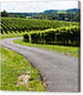Maryland Vineyard Panorama Canvas Print