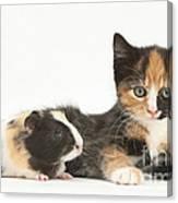 Matching Kitten & Guinea Pig Canvas Print