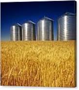 Mature Winter Wheat Field With Grain Canvas Print