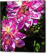 Maui Pink Garden Canvas Print