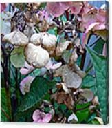 Mauve Hydrangea In Fall  Canvas Print