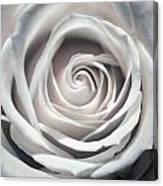 May Rose Canvas Print