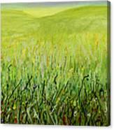 Meadow Four Canvas Print