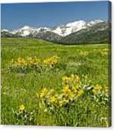 Meadow Landscape Canvas Print