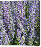 Meadow Sage Flowers Canvas Print