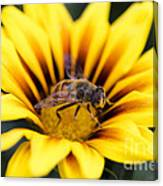 Meant To Bee Canvas Print