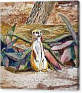 Meerkat And Aloe Canvas Print