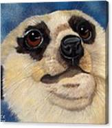 Meerkat Eyes Canvas Print