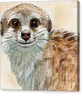 Meerkat 762 Canvas Print