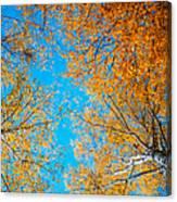 Meet In Heaven. Autumn Glory Canvas Print