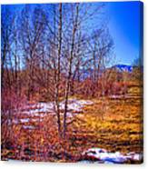 Melting Snow In South Platte Park Canvas Print