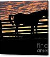 Memorial Day Weekend Sunset In Georgia - Horse - Artist Cris Hayes Canvas Print