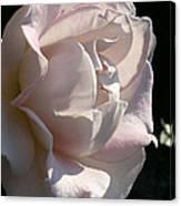 Memorial Rose Canvas Print