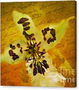 Memories Of An  Orchid Canvas Print